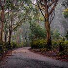 Misty Morning by Delightfuldave