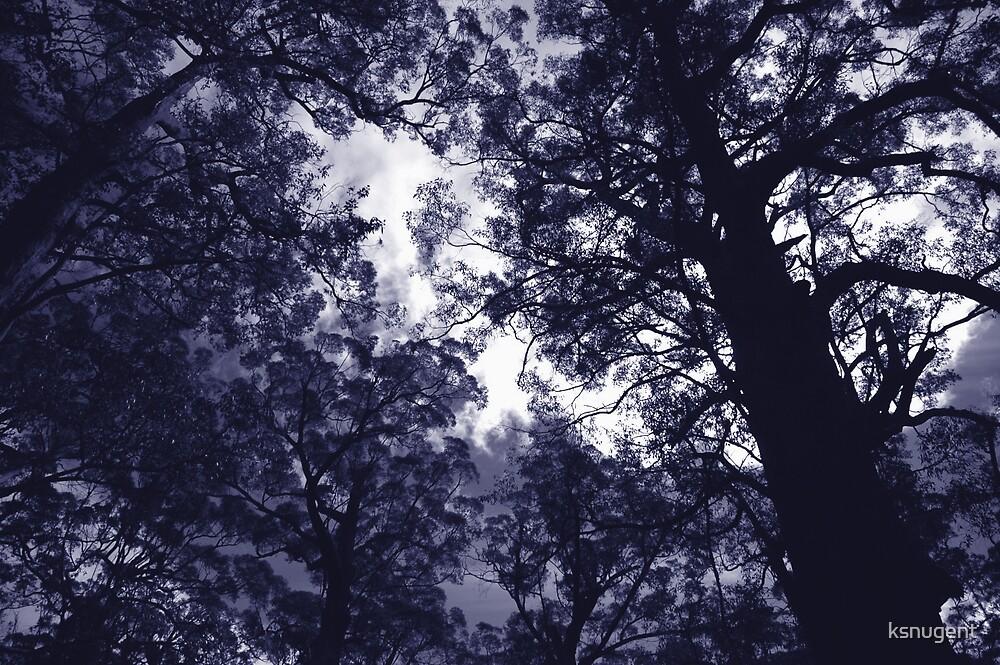 Tree tops by ksnugent