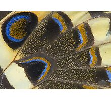 Swallowtail Photographic Print