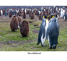 King Penguins on the Falkland Islands Photographic Print