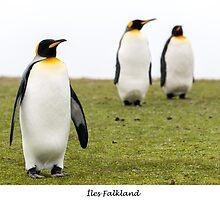 Three king penguins by Jacinthe Brault