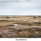 Off road on the Falkland Islands by Jacinthe Brault