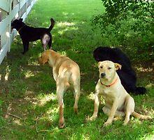 Labradors by WildestArt