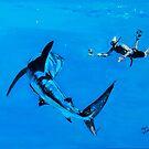 NEIL BURNIE BERMUDA'S OCEAN VET.... by buddybetsy