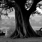 Trees Are For Sharing by Alan Bennett