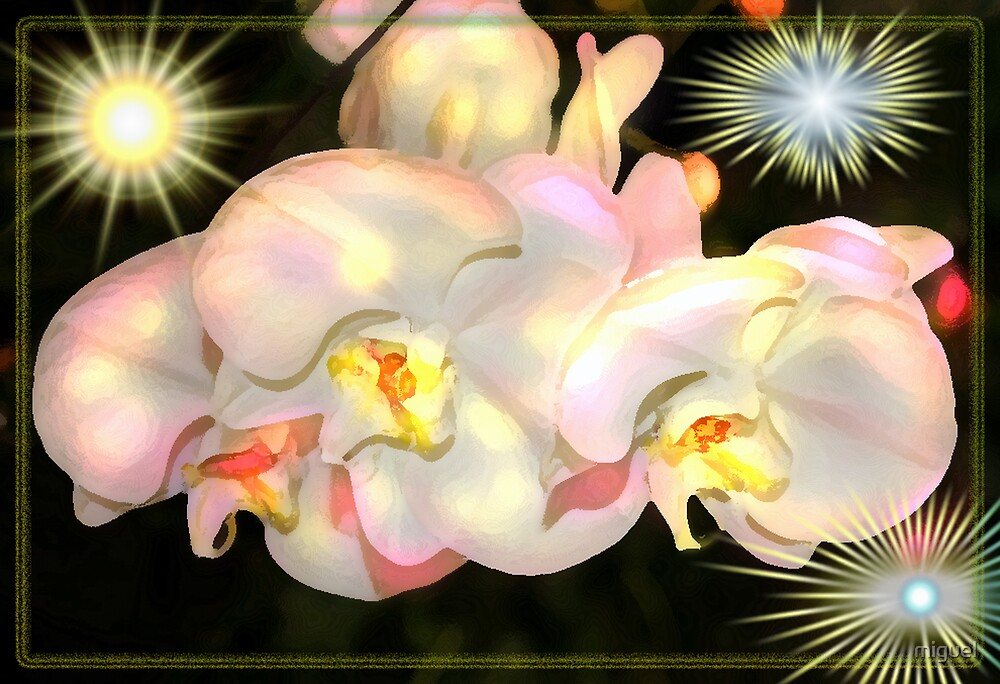 ORCHID KISSED WITH BERRY STAINED LIPS TO GO WITH NEW POEM by miguel