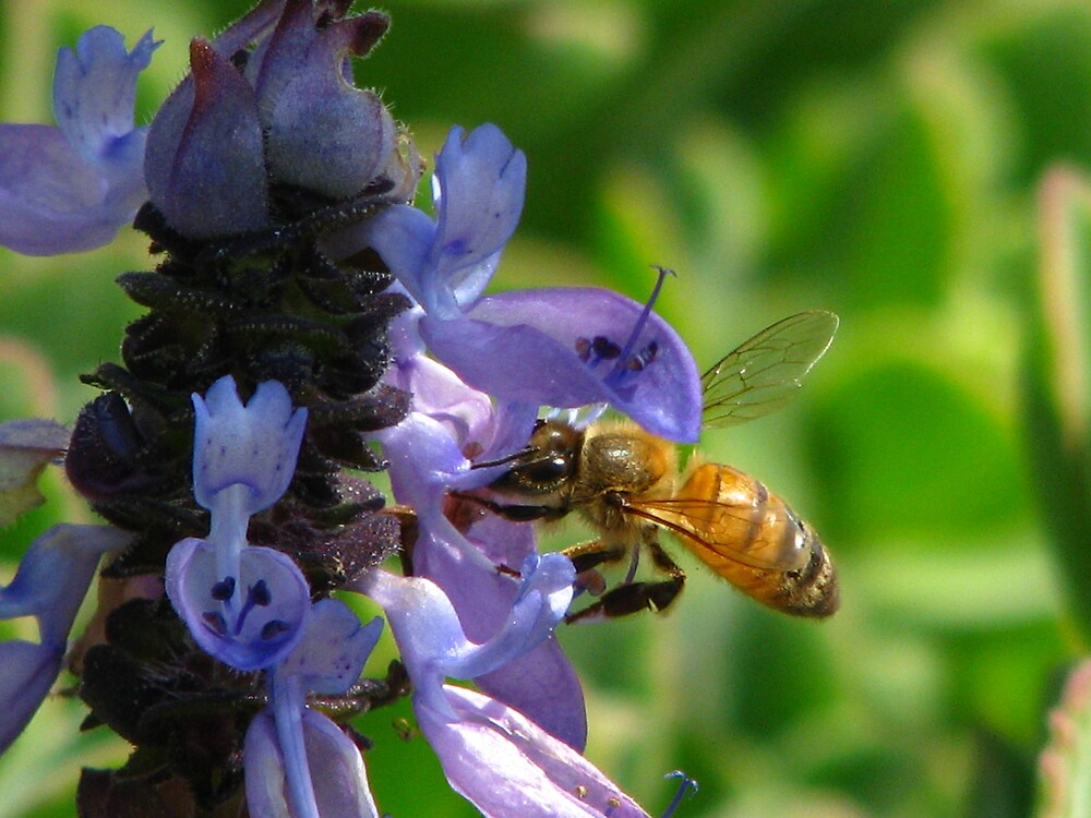SUNYDAY BEE 2 by Opat