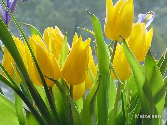 Tulips & Iris by Maizajean