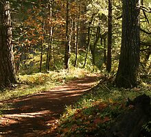 Forrest Path by boothillbruce