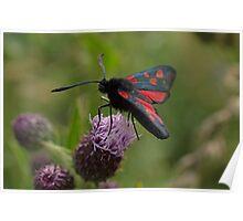 Five-spot Burnet Moth Poster