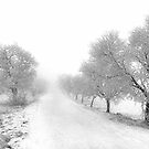 """"""" Cold winters day """" by CanyonWind"""