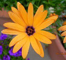 Flower by daydreamer23
