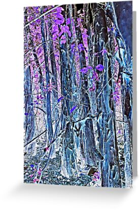 Paperbark - Inverted Landscape by TonyCrehan