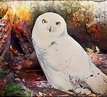 Owl & Textures by andymars
