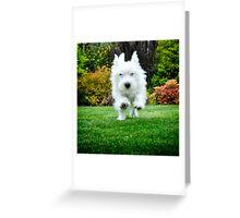 Bella - Just comin' to say... Greeting Card