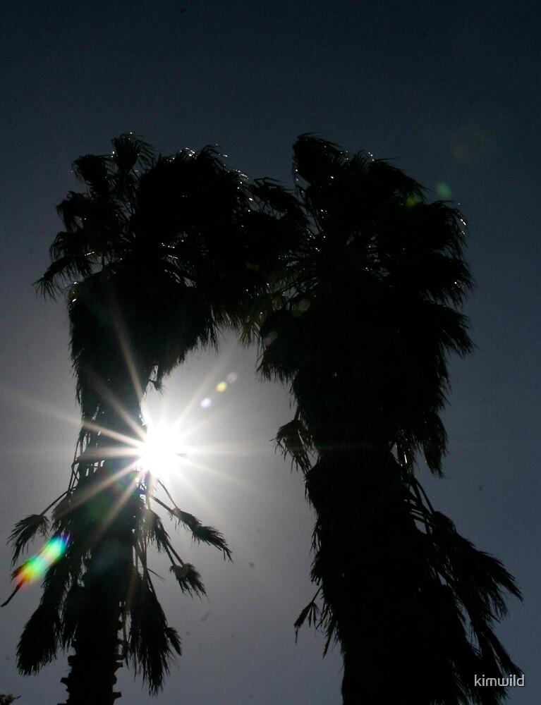 Palm Tree sunshine by kimwild