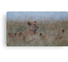 Lioness and Cubs Canvas Print