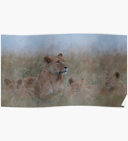 Lioness and Cubs Poster