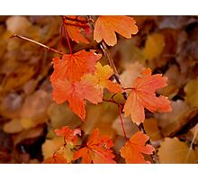 Fiery Fall Photographic Print