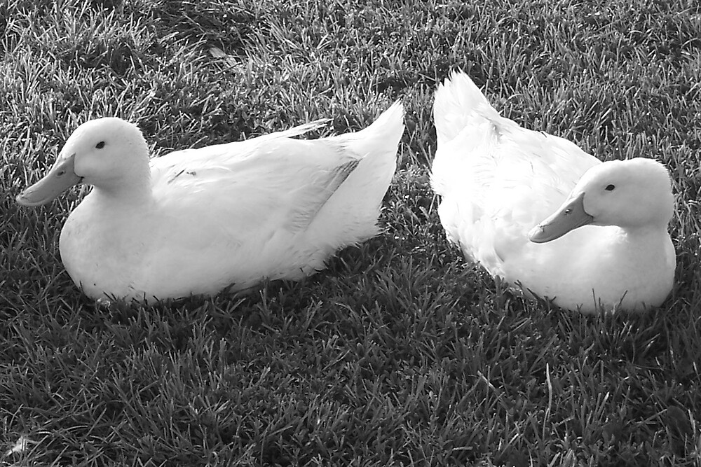 ducks by Rebekah