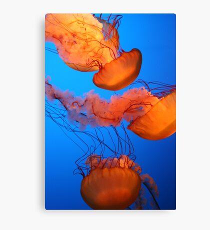 Glowing Jellies Canvas Print