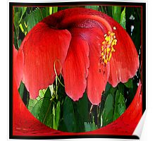 Red Hibiscus Introverted Poster