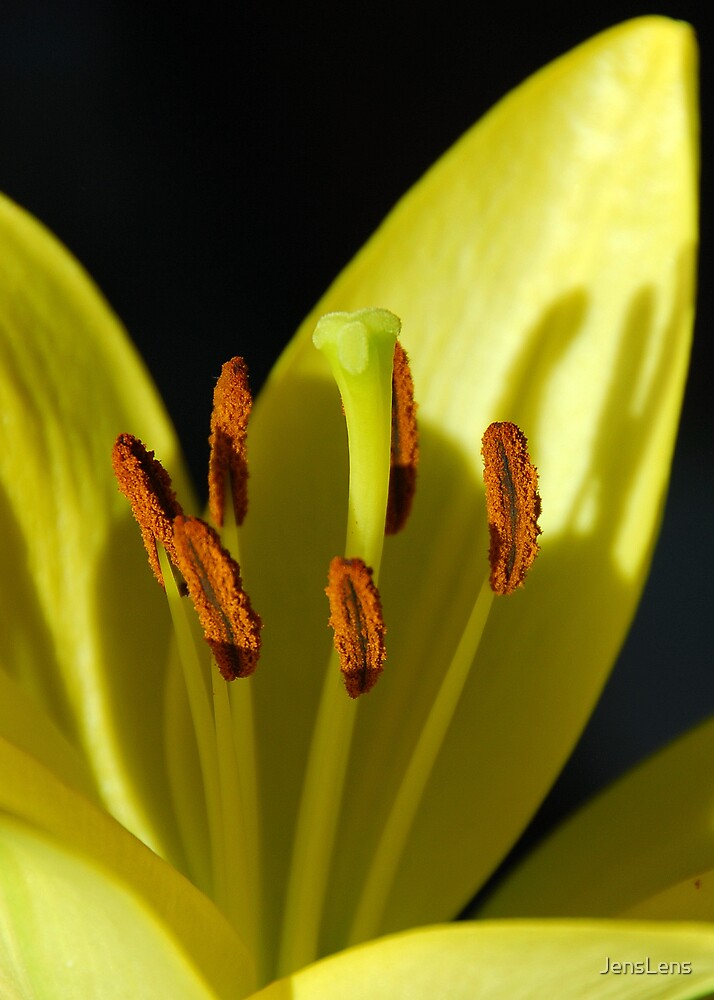lilly 001 by JensLens