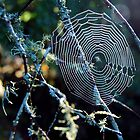 Winter Cobweb by joche