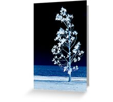 The Night Wind Has Secrets To Tell Little Tree Greeting Card