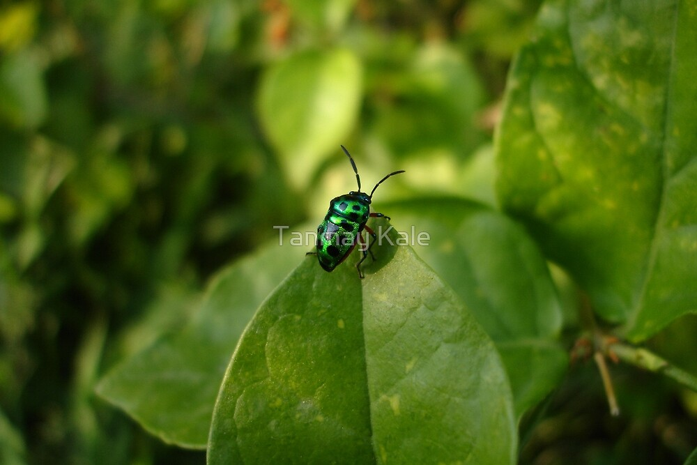 The Bug's Life by Tanmay Kale