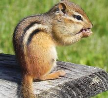 Chipmunk Lunch by Martha Medford