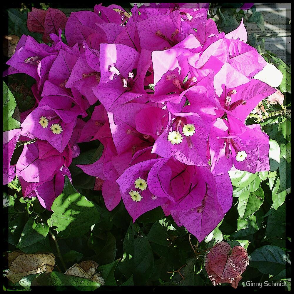 Purple Bougainvilla by Ginny Schmidt