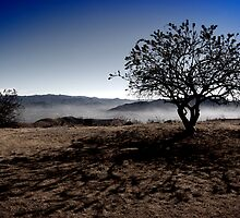 Not so cold Tree by Michael Naylor