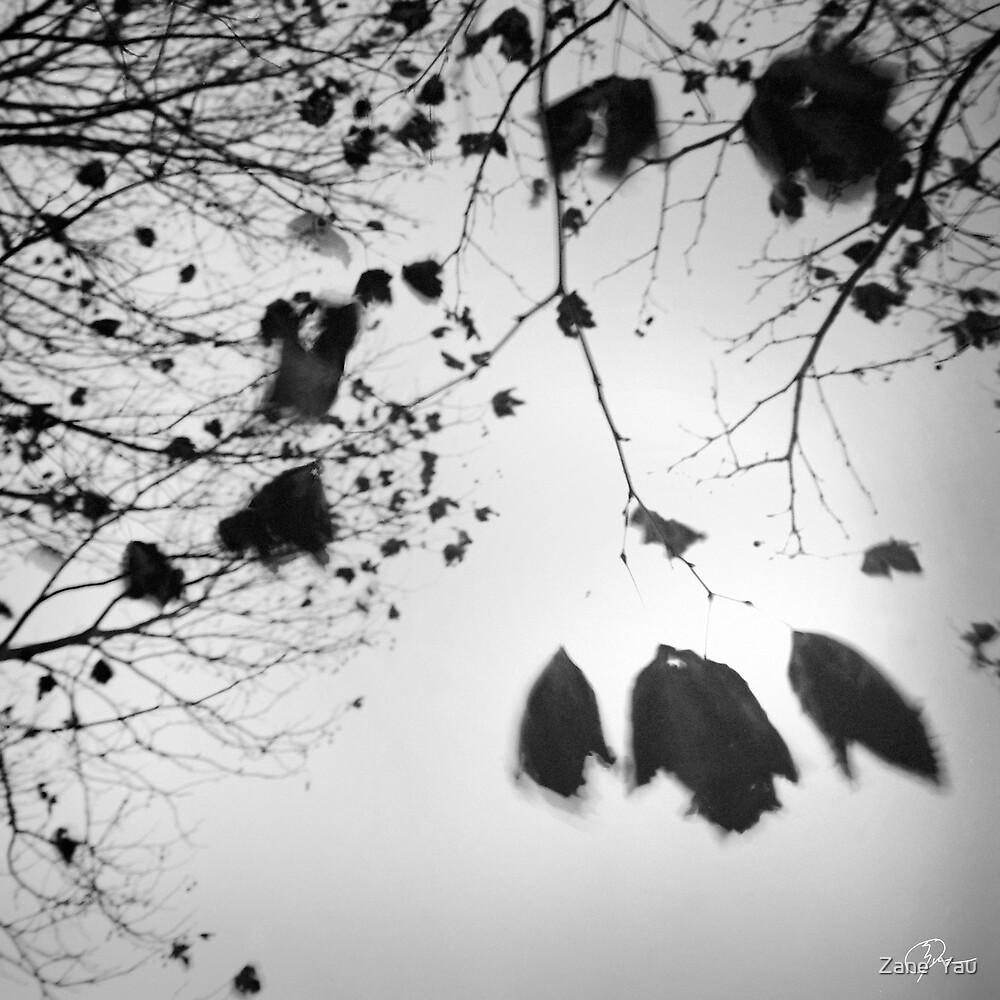 Season by Zane  Yau