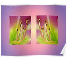 Daylily Double Poster