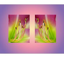 Daylily Double Photographic Print