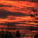 Fire in the Sky by coleen gudbranson