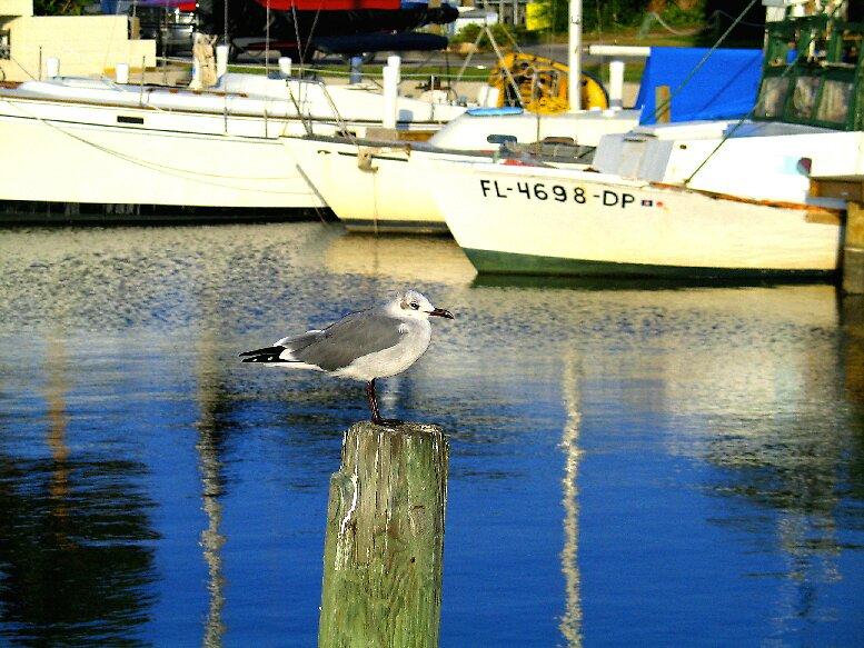 Bird on the Dock by John  Simmons