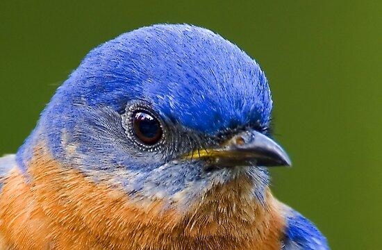 Blue by Mundy Hackett