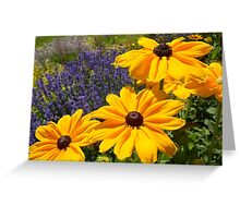 Black eyed susans against Lavendar... Greeting Card