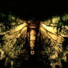 Fantastical Moth by MotherNature
