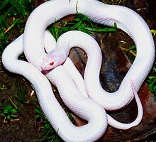 ALBINO SNAKE by spacealiens