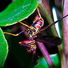 Wasp Thing by Terry Best