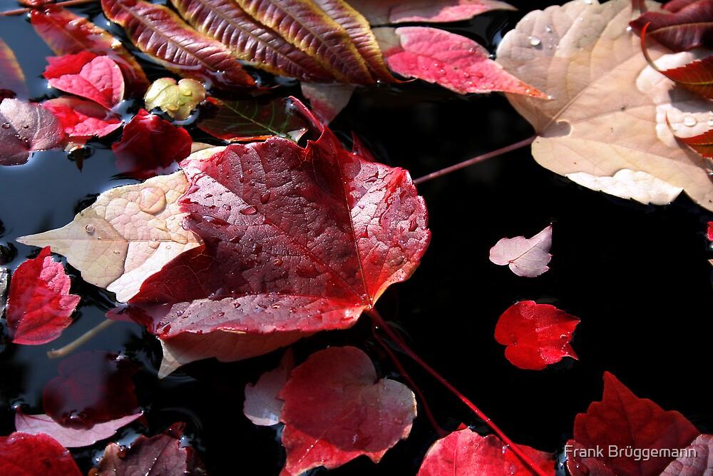 autumn leaves 4 by Frank Brüggemann