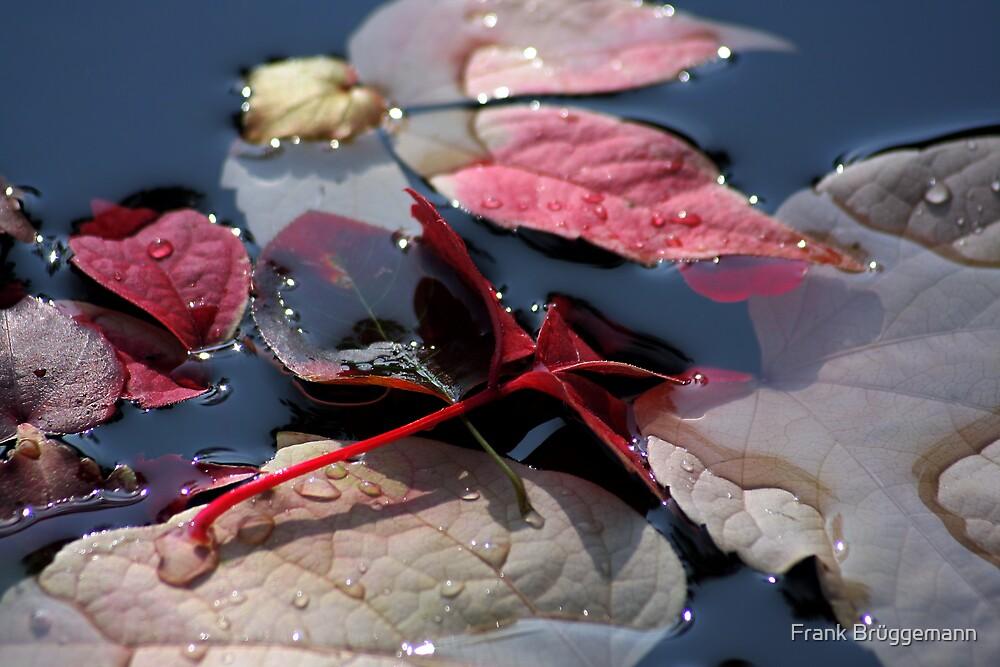 autumn leaves 6 by Frank Brüggemann