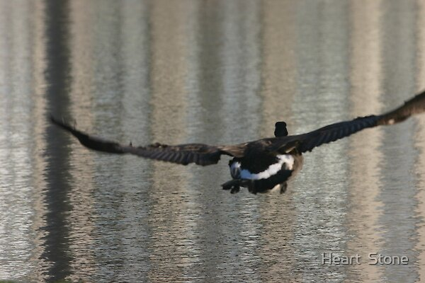 On The Wings Of A Goose by Heart  Stone