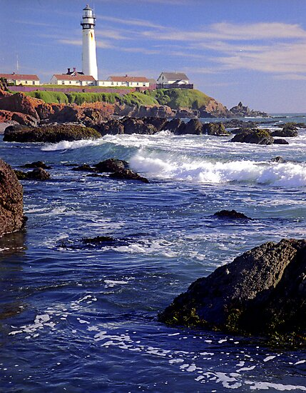 Pigeon Point Lighthouse Calf by Janice Crayton
