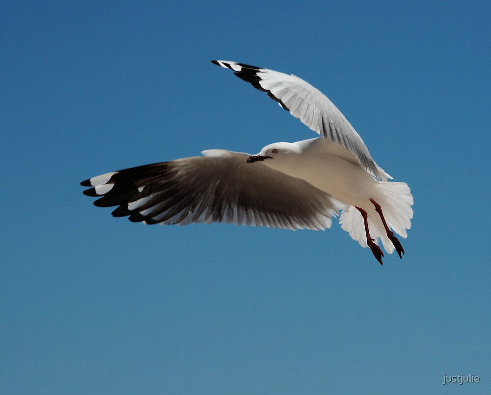 Inflight by justjulie