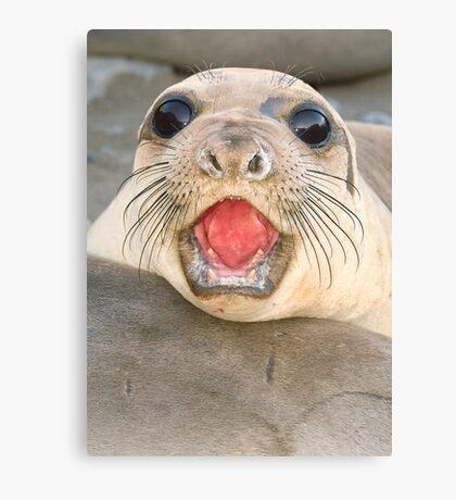 A female Elephant seal Mirounga angustirostris Canvas Print