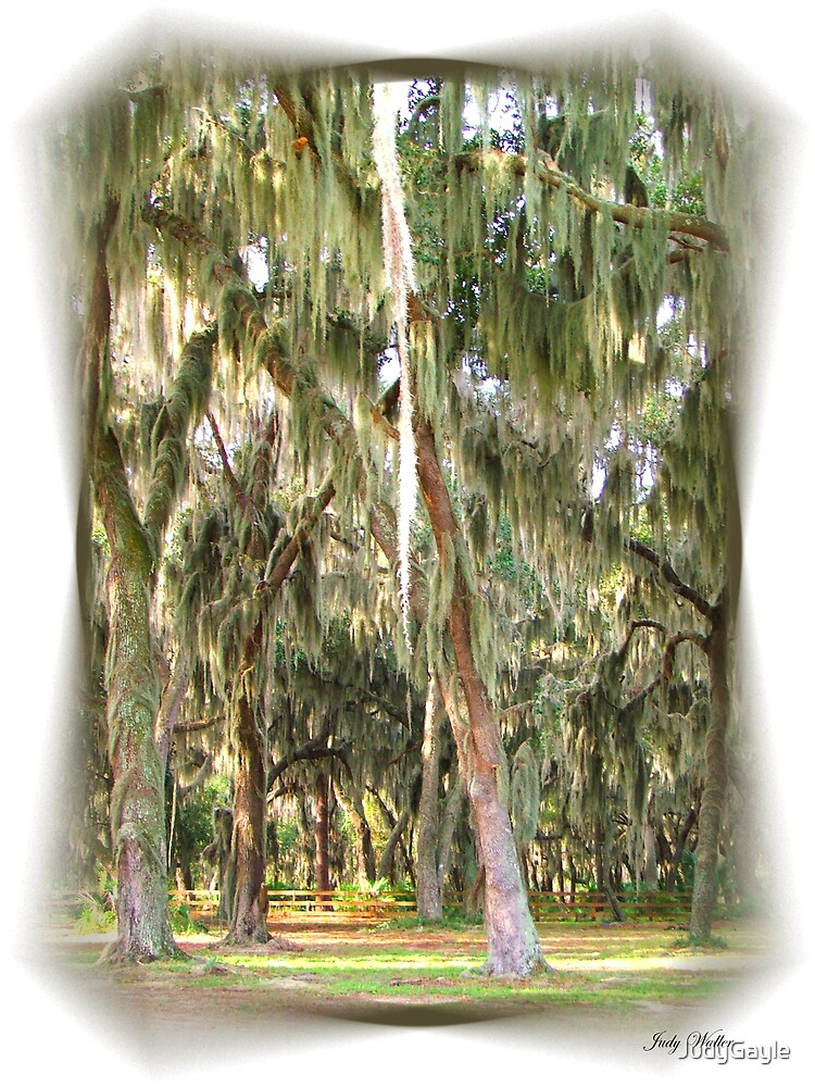 Spanish Moss by Judy Gayle Waller